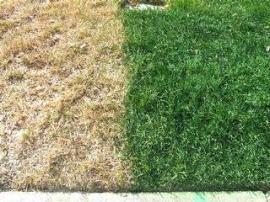 grassisntgreener